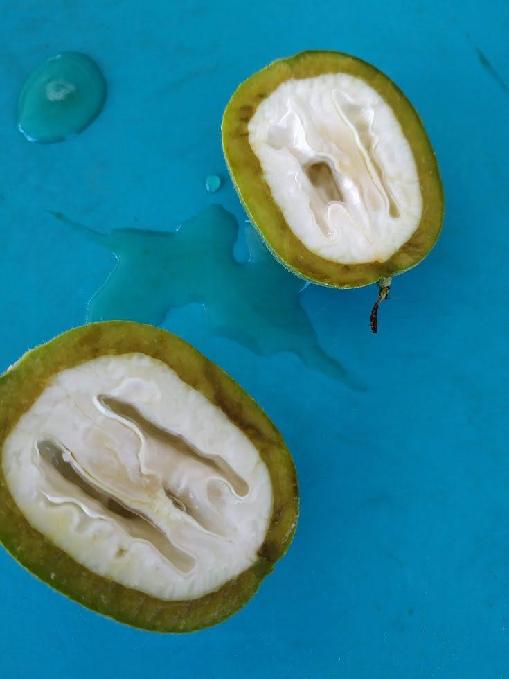 Unripe walnuts cut image