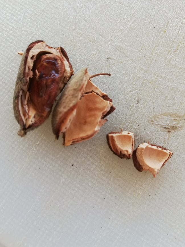 Almond shell image
