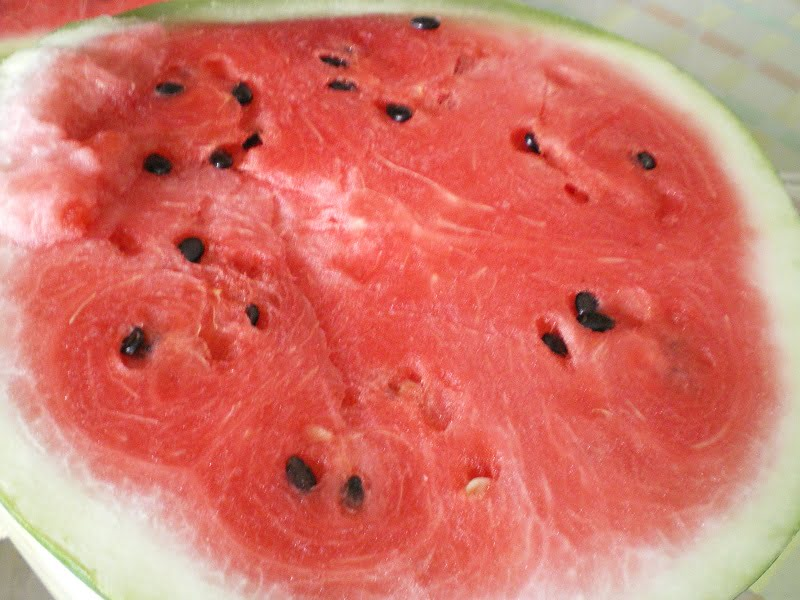 Thick skinned watermelon image
