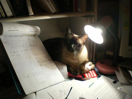 Lisa our cat studying image