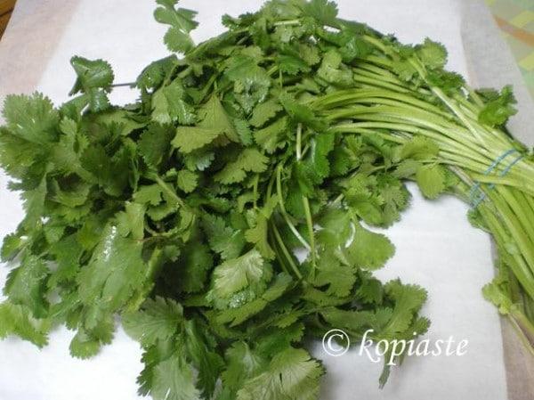 cilantro or coriander image