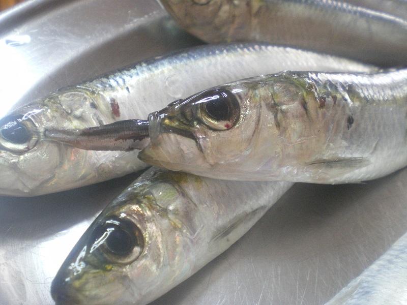 Fresh Sardines image