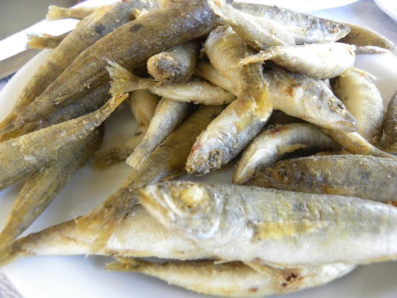 Fish Marida picarel image