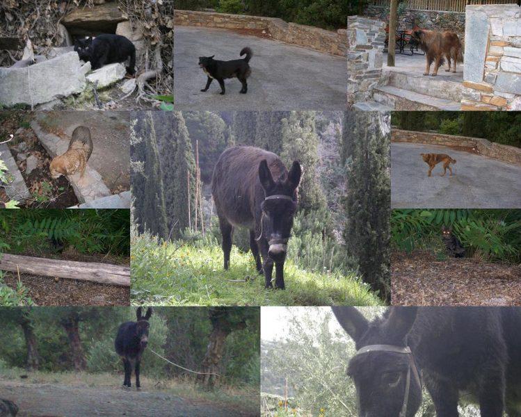 Collage Hymettus animals
