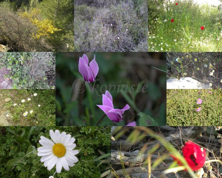 Collage wild flowers