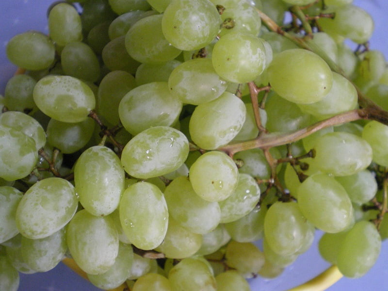 A bunch of sultana grapes image