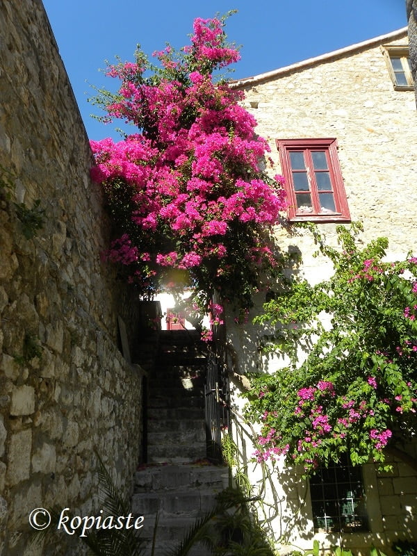 Nafplio and bougainvilleas