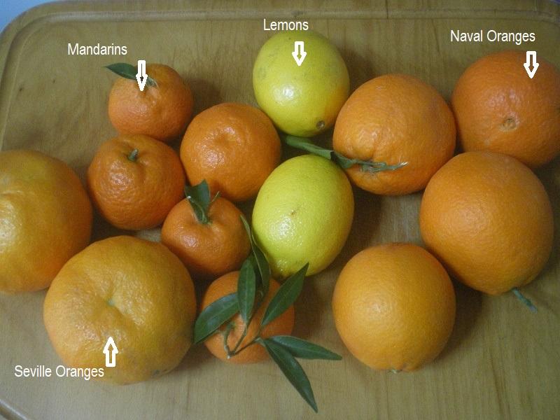 Four citrus fruit image