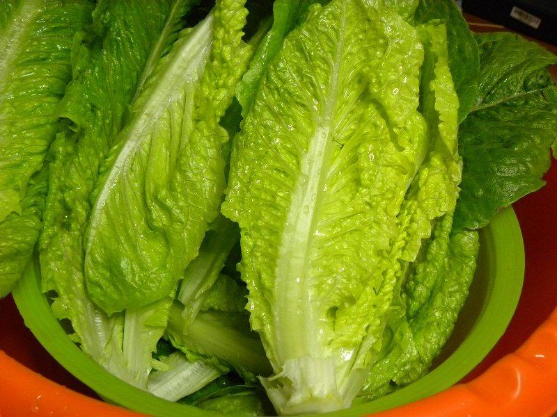 Romaine lettuce heads image