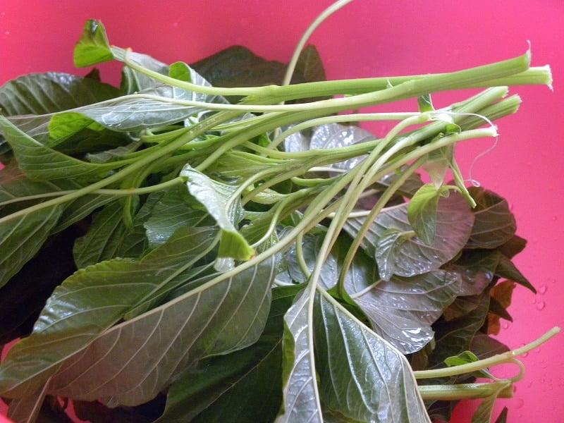 Vlita amaranth greens washed image