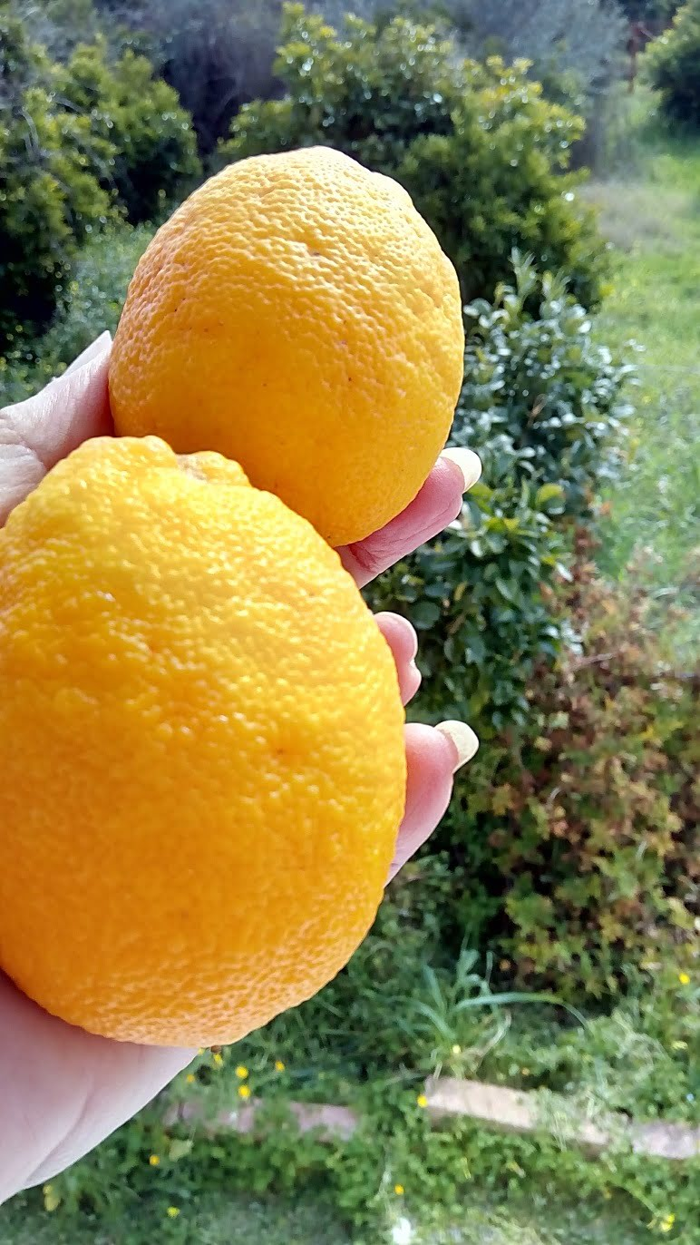 Two bergamots from last year image