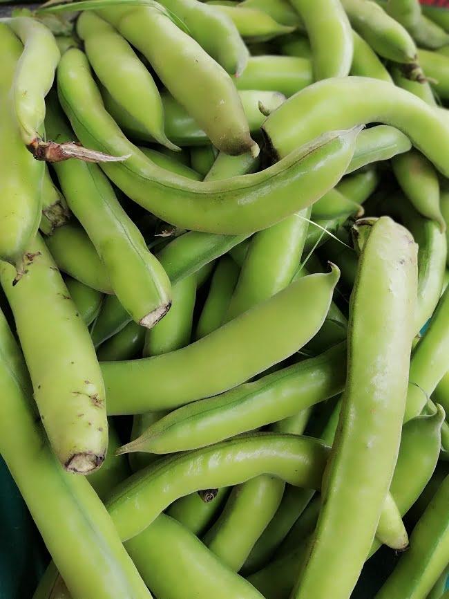 koukia fresh fava beans image