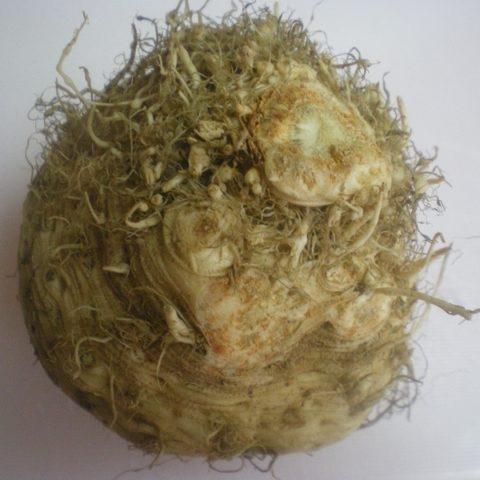Celeriac-root-image