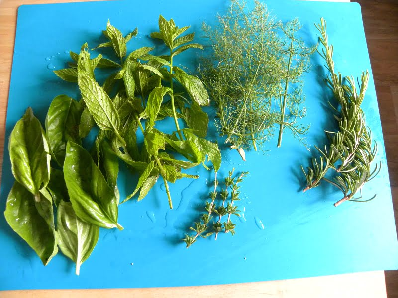 Fresh herbs basil, mint, fennel, rosemary and savory image