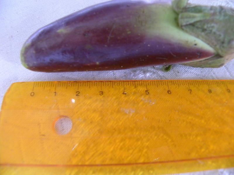 measuring the eggplant image