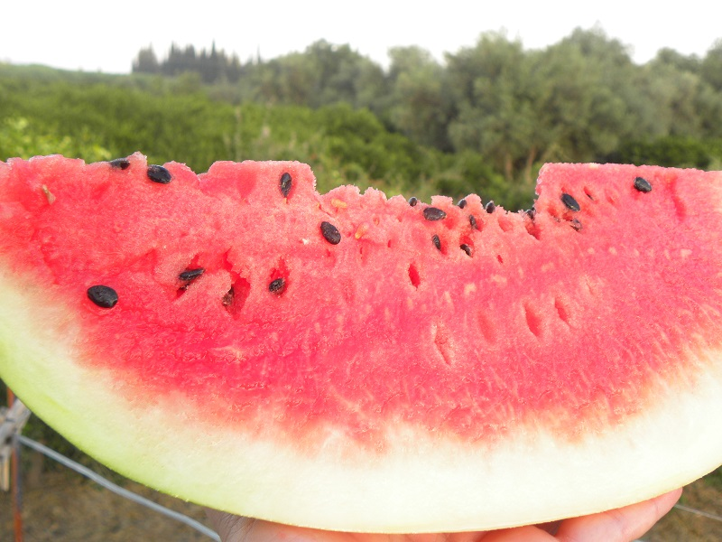 Watermelon with thick skin image